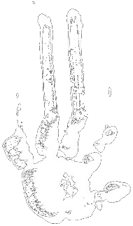 Logo Jelodanti Records - Pochoir Left Hand